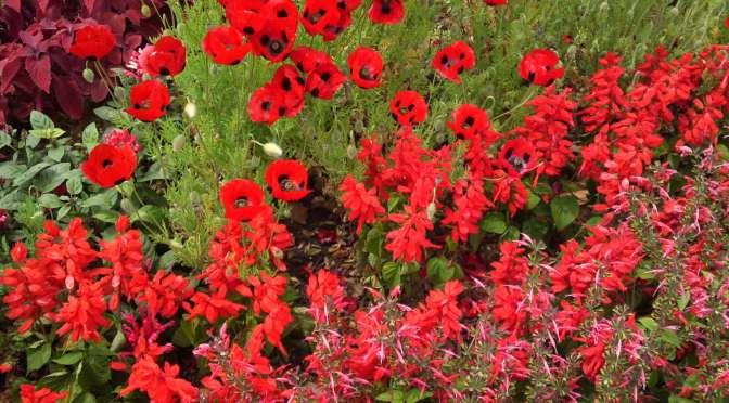 Poppies in Hamana Lake Flower Garden in Hamamatsu Ciy! | UOKA ...