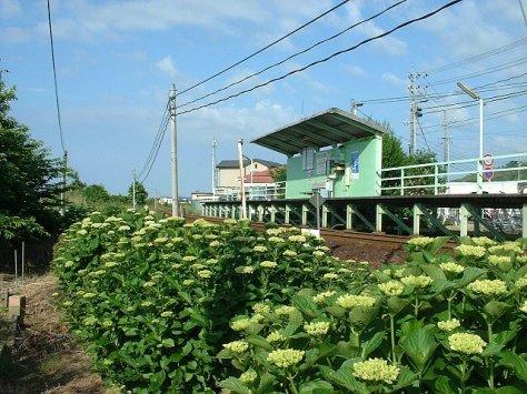 TENHAMA-LINE-OKAJI