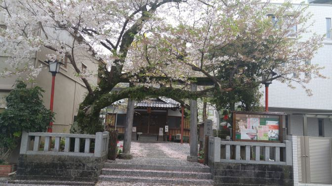 Ichikaban Inari Shrine under Cherry Flowers in Takajo, Shizuoka City!