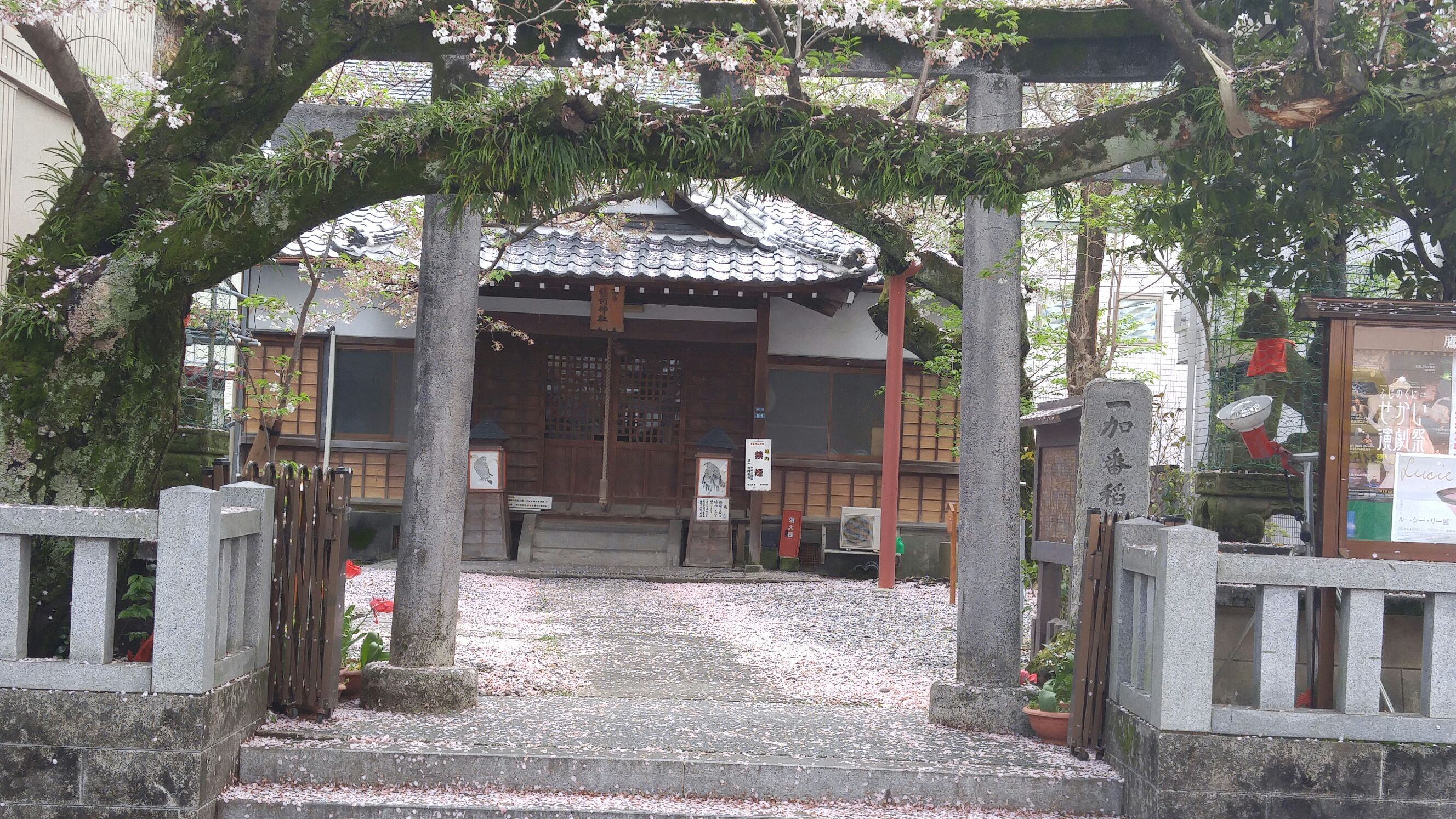 Inari amateur paige | XXX foto)