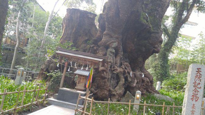 Kinomiya Shrine (木宮神社) in Atami City!